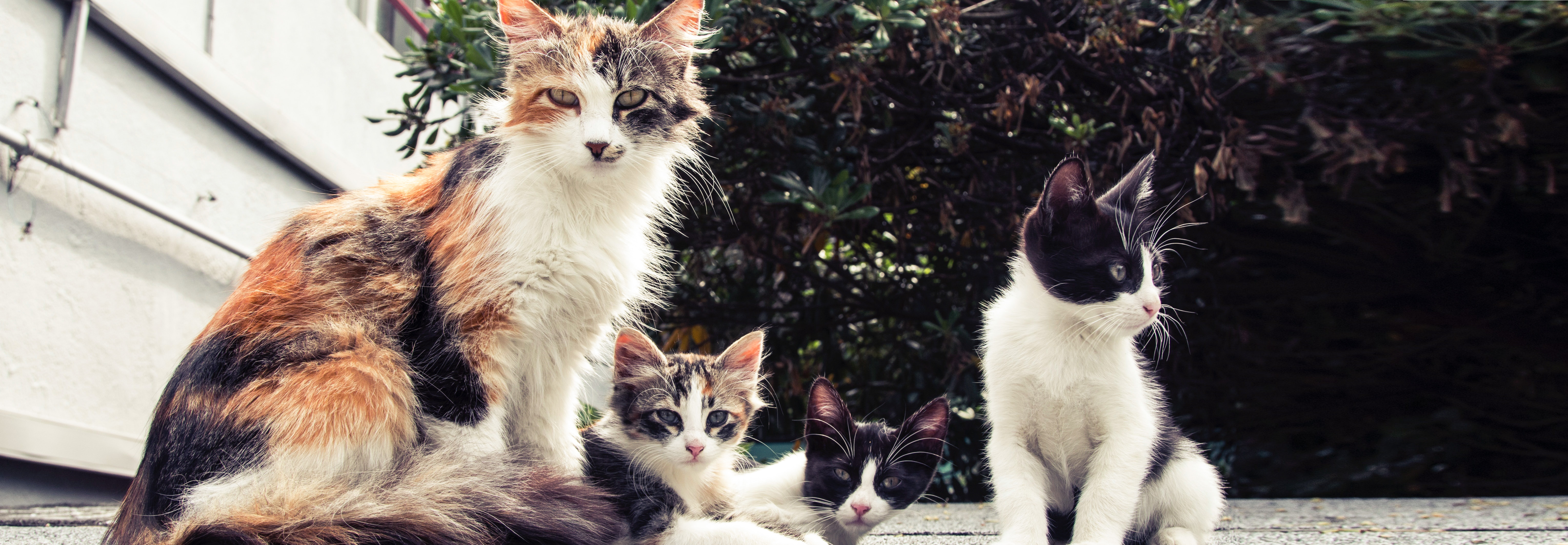 animals-breed-cats-140134 chats errants (small)_edited.jpg